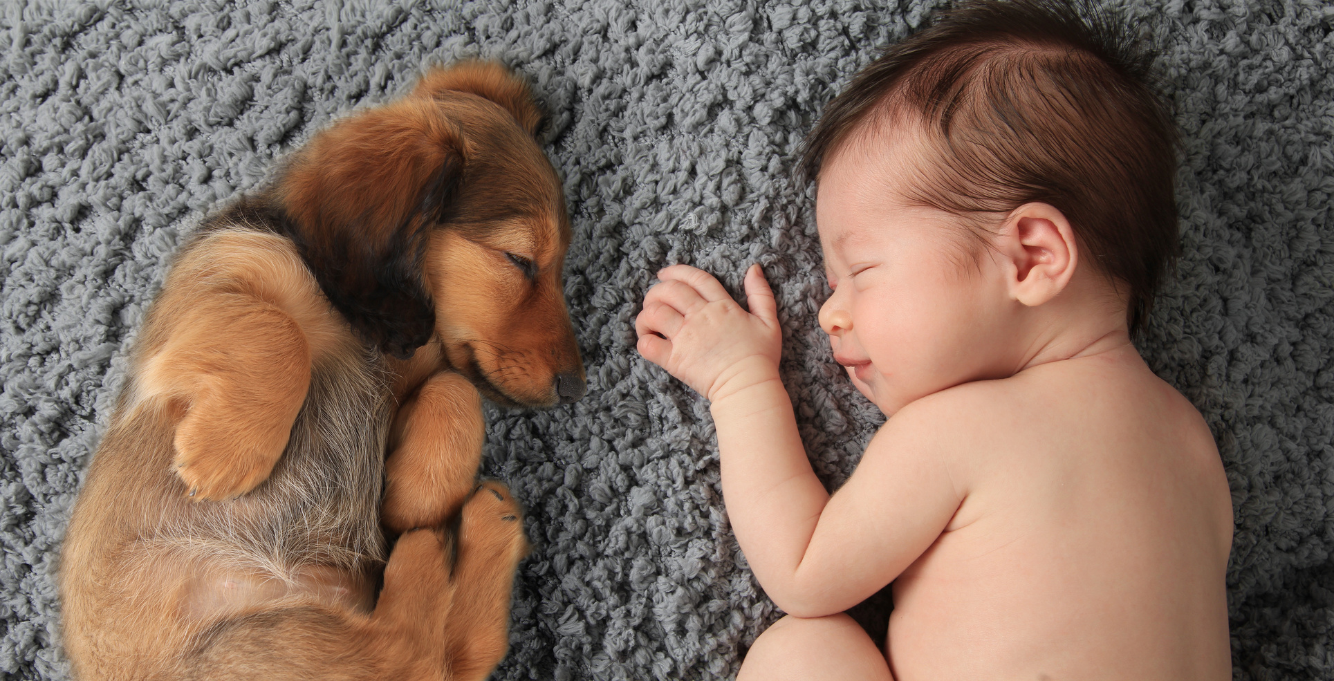 Newborn baby girl sleeping next to a dachshund puppy